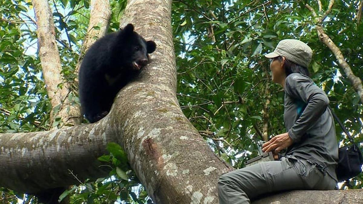 「比貓熊更珍貴!」 台灣黑熊登CNN頭條