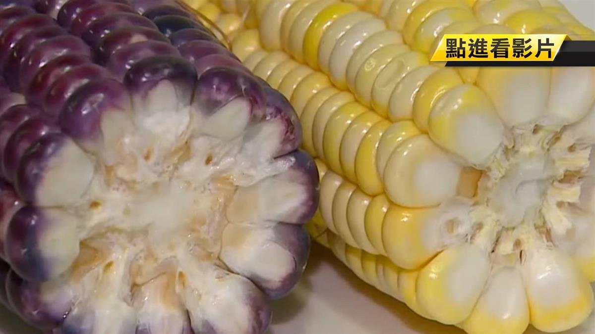 民眾煮紫玉米…雙手驚染色!專家曝真相