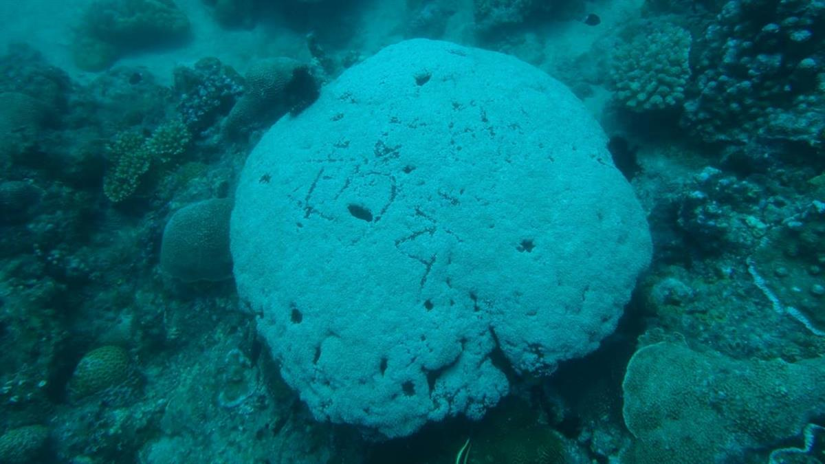 小琉球潛水刻名…活珊瑚秒萎縮 網美遭怒轟
