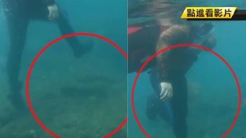 摸不到海龜用踩的 小琉球首逮遊客虐龜重罰