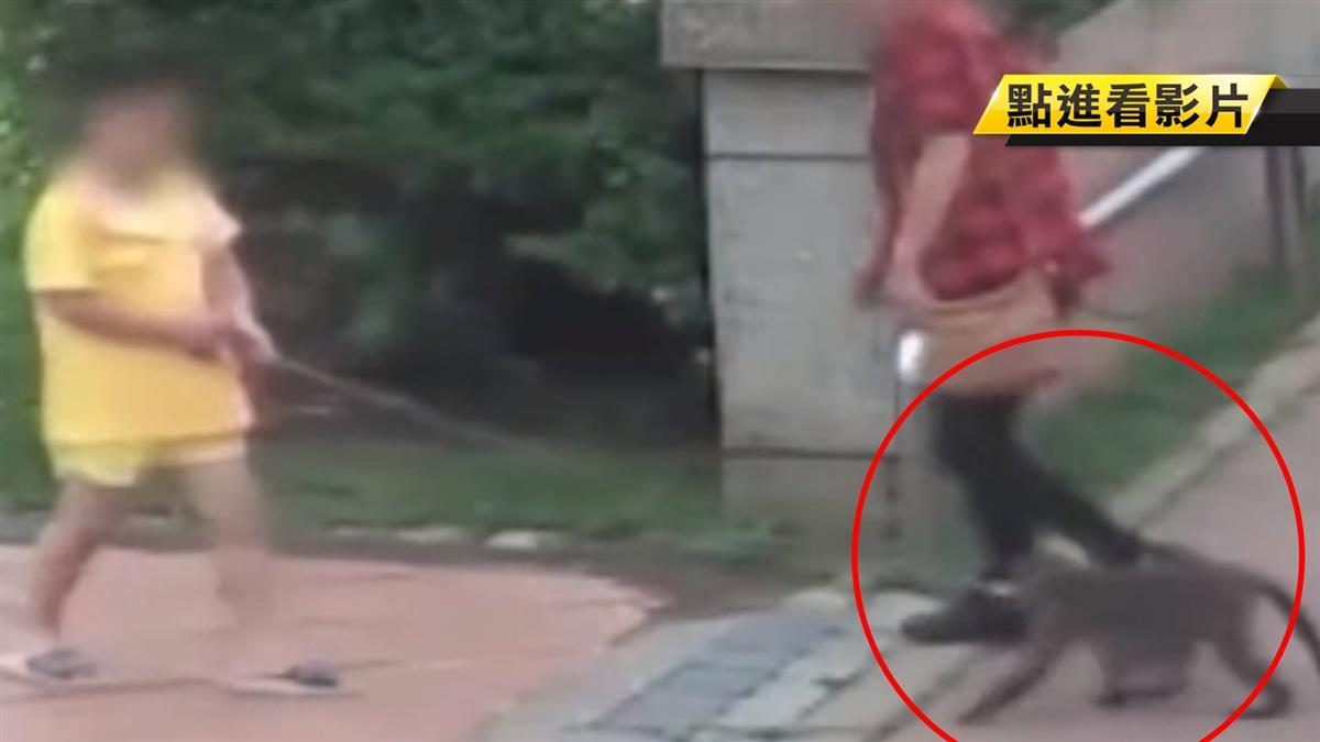 牽猴到公園散步!5歲女童遭咬傷 家長怒報警
