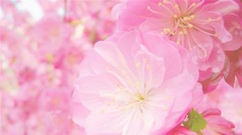 風度入骨,對爛桃花還能保持禮貌的星座