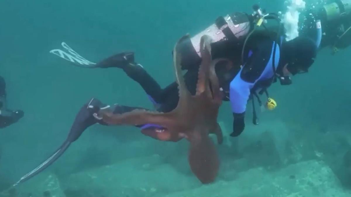 2公尺巨型章魚突襲 潛水員遭8隻腳緊抓拖老巢