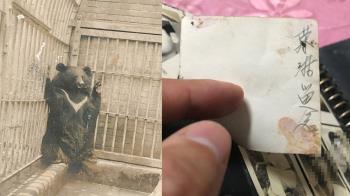 阿嬤養過很凶的狗 調查員看傻:台灣黑熊?