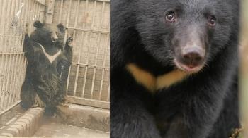 狂嬤把台灣黑熊當狗養…神展開 動物園回應了