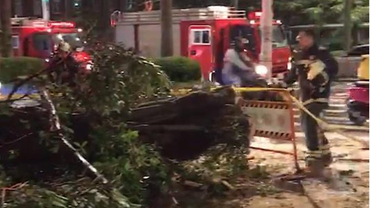 倒楣!北市路樹突傾倒 女騎士路過被壓傷