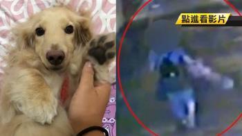 台師大UBA女球員遭爆虐狗 校方說重話