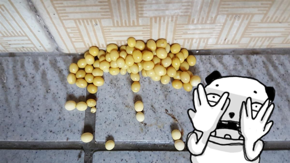門口一堆橢圓黃豆!他發毛曝16.5cm卵主真相