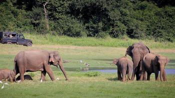 近70頭被撞死!印度推「嗡嗡聲」嚇跑大象
