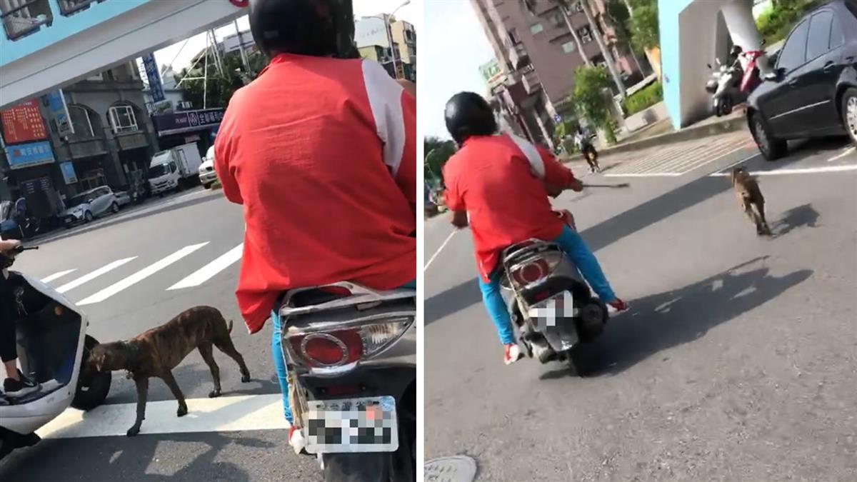 飼主烈日騎車遛狗 辯:這樣才會吃飯!網怒了