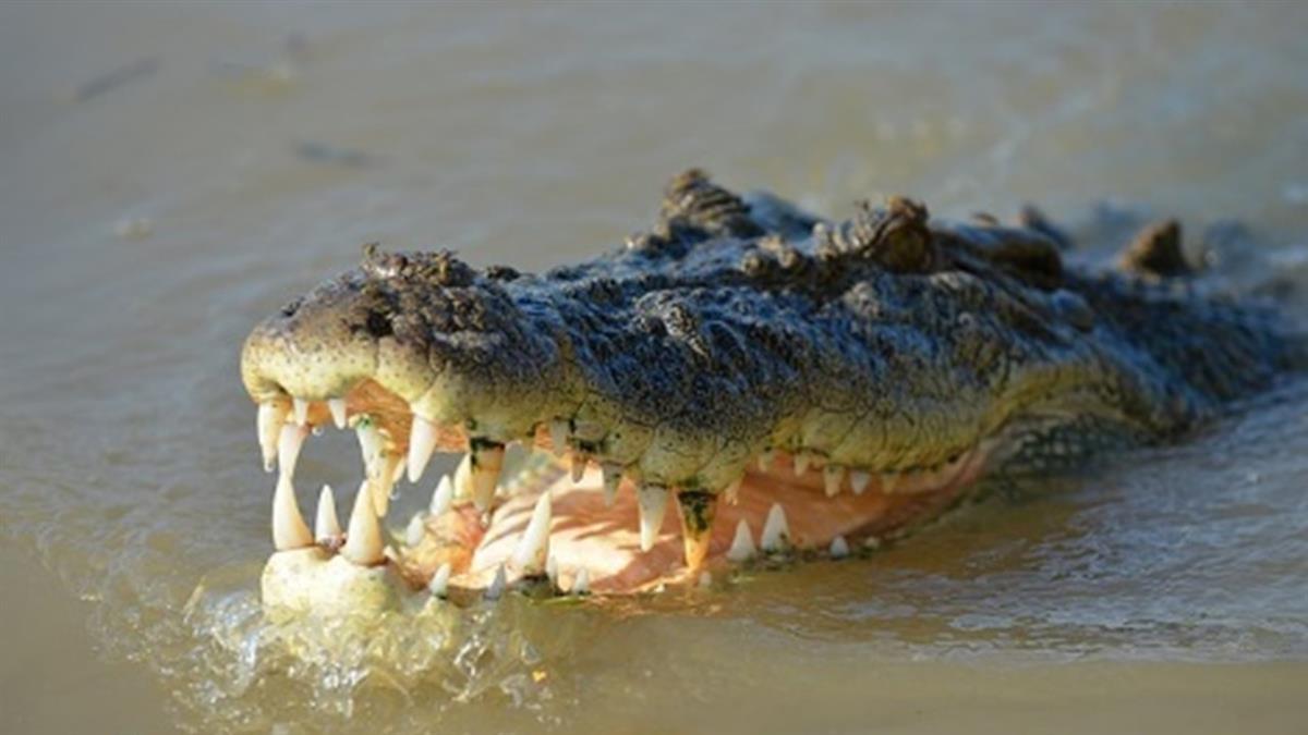 毒品沖馬桶 流入下水道…冰毒鱷魚嗑到嗨翻