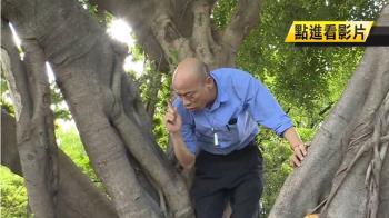韓國瑜視察登革熱防疫 竟爬樹查看樹洞