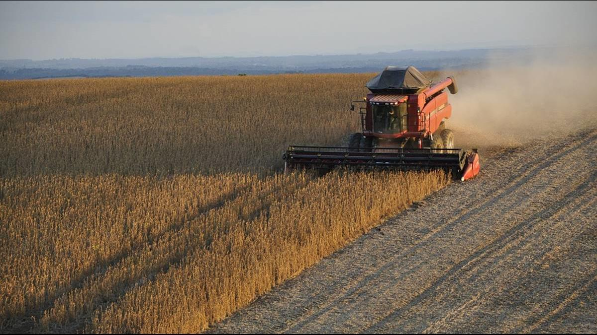 陸買美百萬噸大豆是假的?爆和這國簽4千噸合約