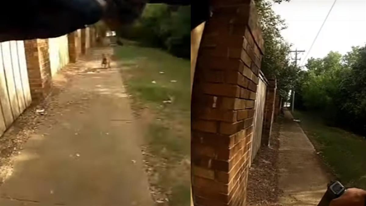 剛上任菜鳥警被狗嚇到 竟開槍擊斃女主人!