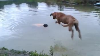 主人溺水了!忠狗秒跳水救人 真相反轉超慚愧