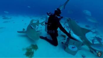 他海中滴血實驗!20分鐘後…41條鯊魚包圍