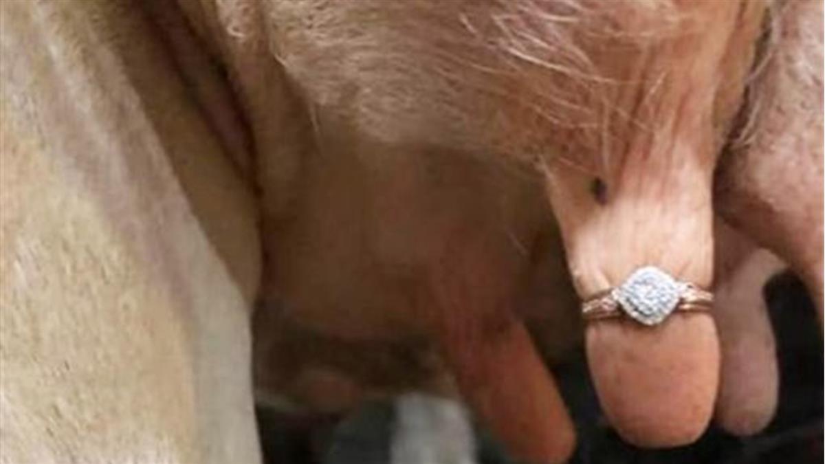 鑽戒套乳頭!農夫超奇葩求婚 1.8萬人怒了