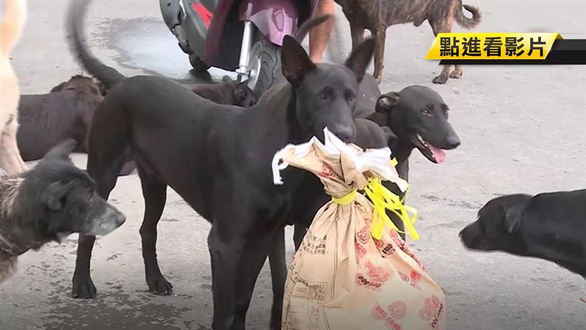 逾50隻流浪狗霸街 和美居民怕:會追又會咬人