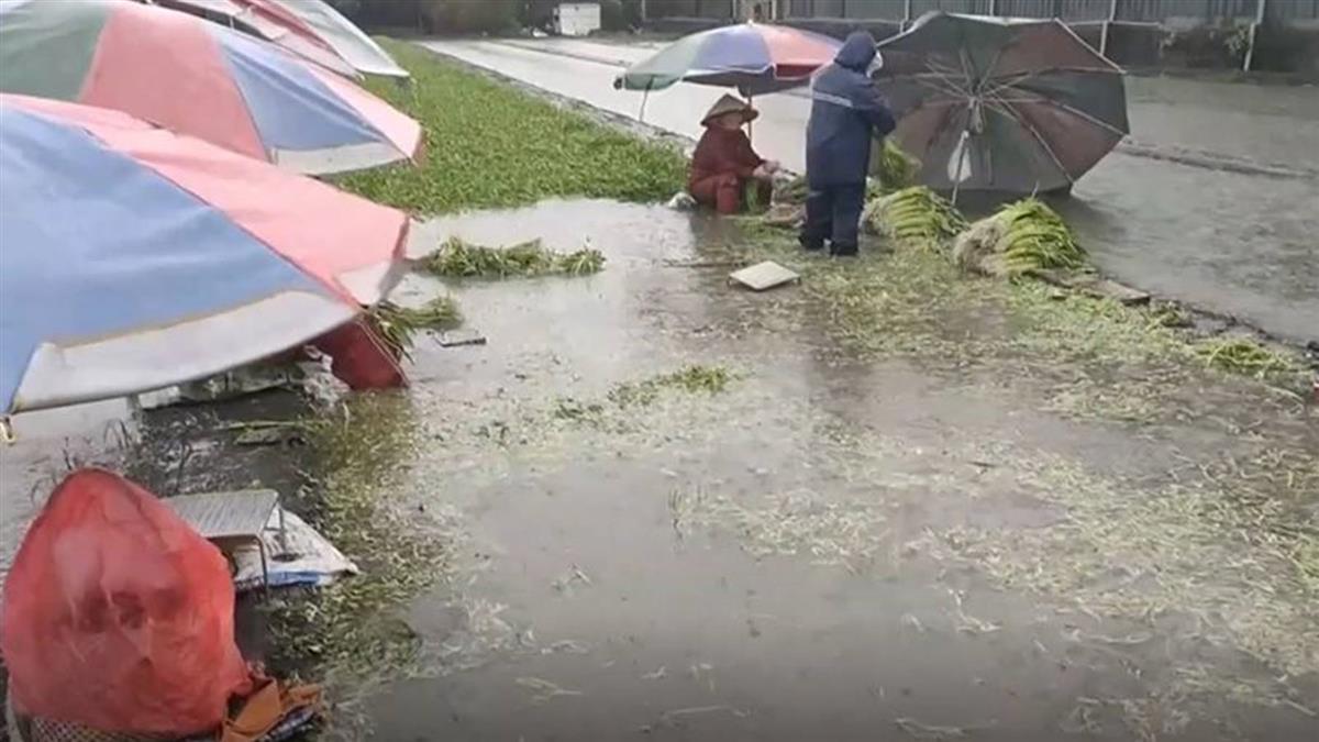 清晨雷電交加!水淹西螺菜園 菜農冒雨搶收