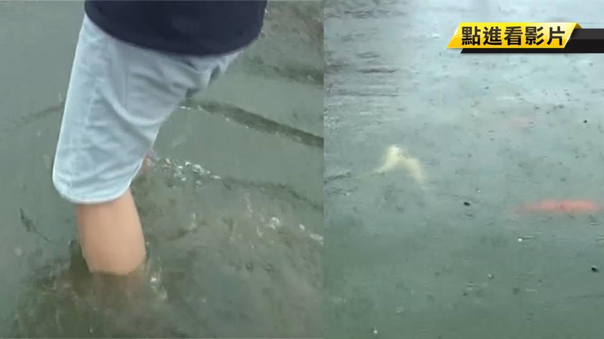 雨炸彰化!水淹小腿肚 景觀公園鯉魚游草地