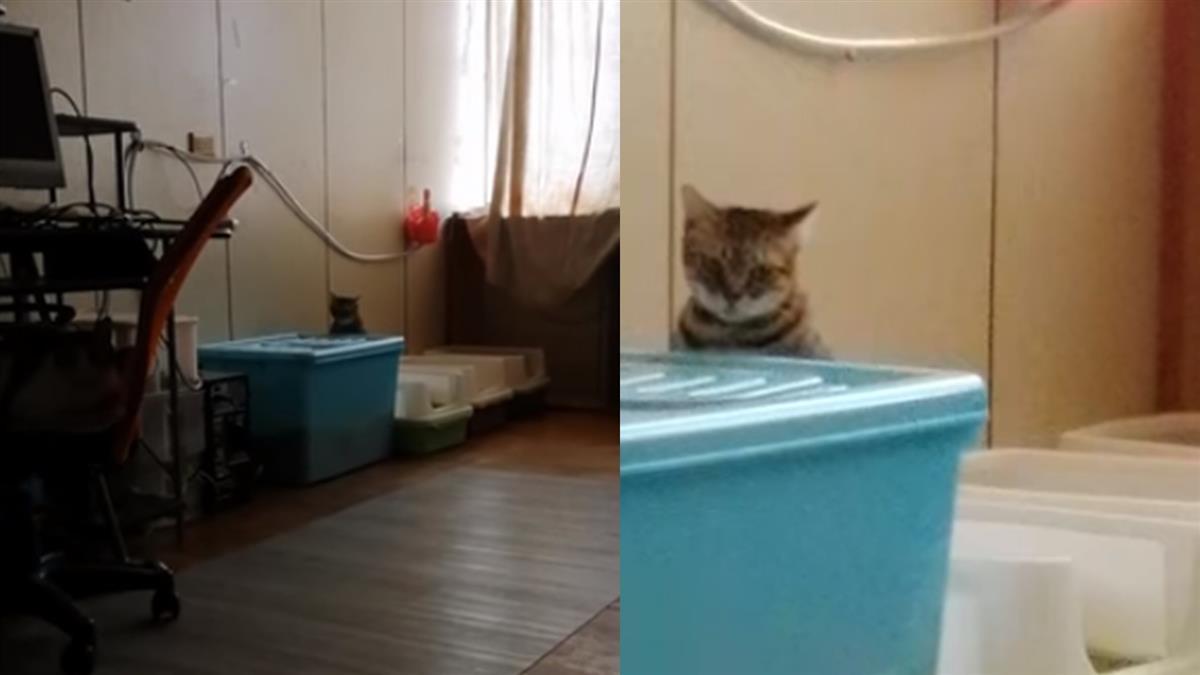 她拍10秒貓日常 突傳詭異男聲…網勸:快拜拜