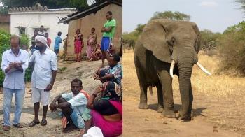 11歲女孩在家煮飯!大象聞香竟破門踩死她