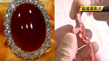 紅珊瑚怕酸!避免汗、香水、化妝品 接觸恐破壞