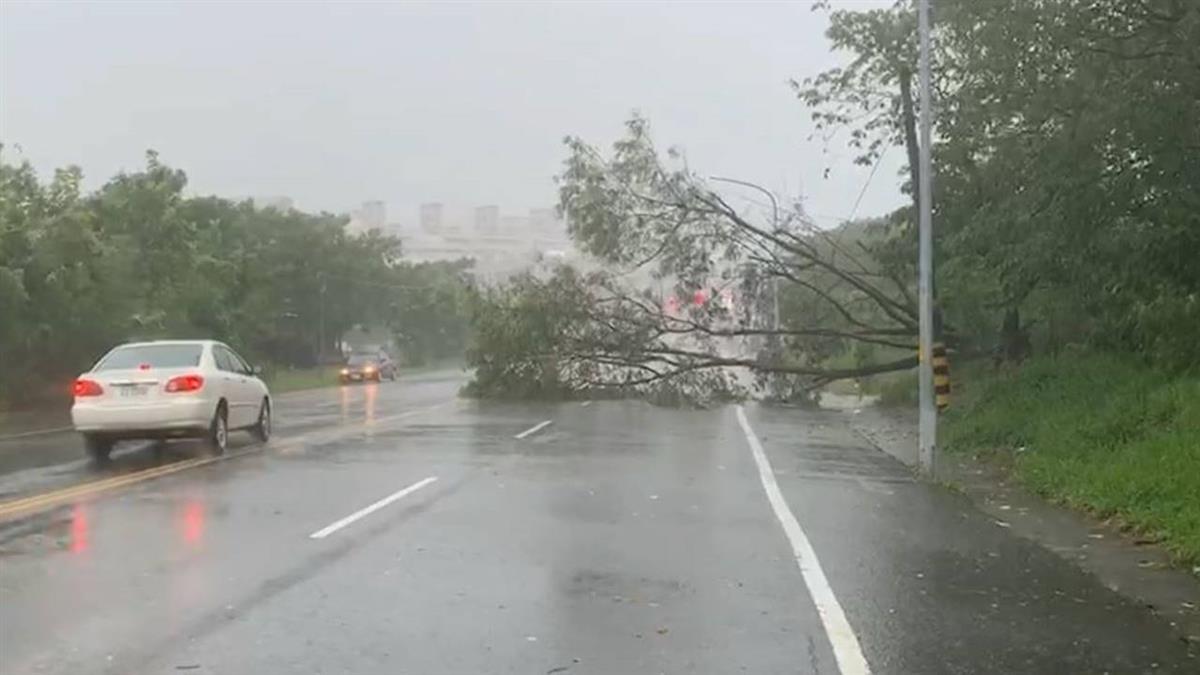 白鹿襲台!台東強吹9級陣風 路樹遭連根拔起