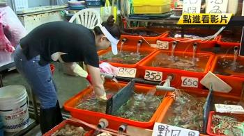 小於8cm不能抓!違捕抱卵母蟹恐遭罰15萬