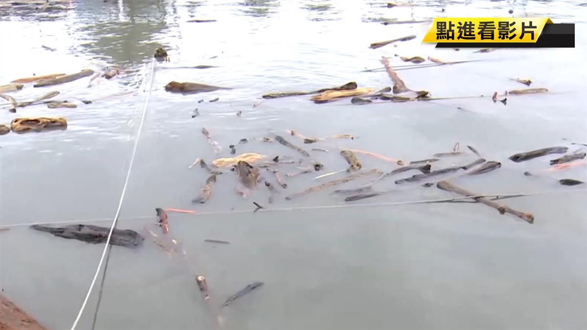 白鹿過境 漁港全漂流木!漁民生計慘受影響
