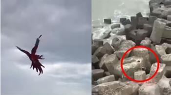 這款飼主!颱風天訓鳥 鸚鵡遭風吹浪捲慘死