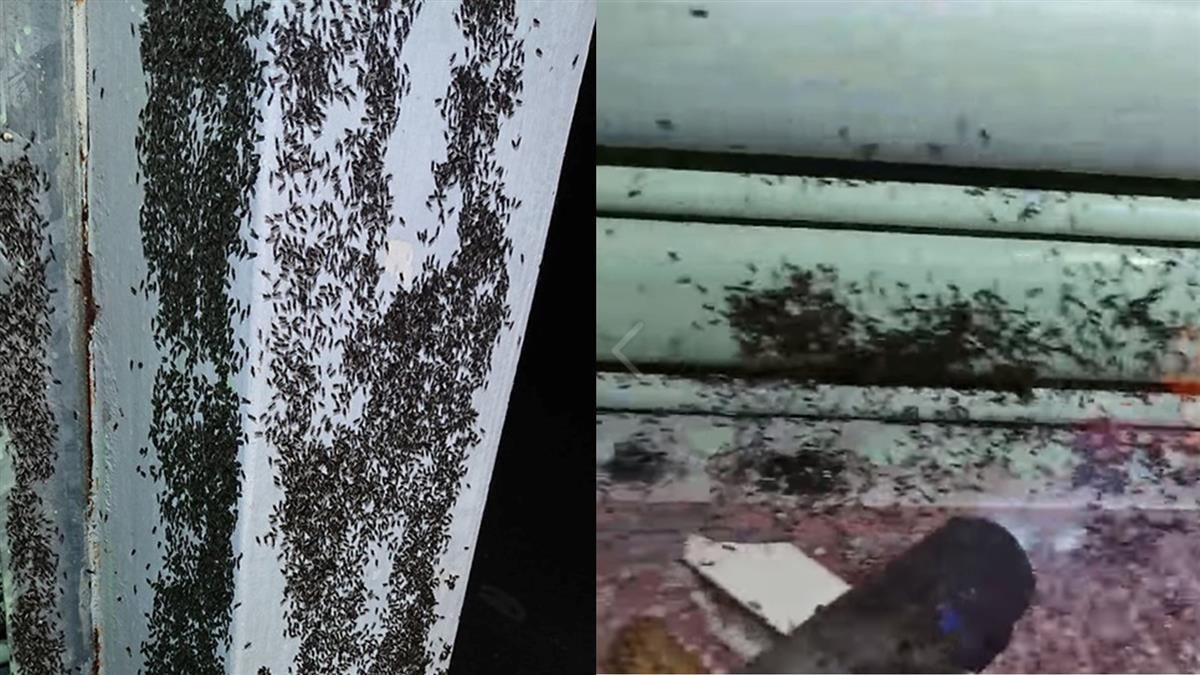 密恐注意!上萬飛蟻爬滿牆…火攻都沒用