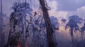 亞馬遜森林惡火 巴西總統態度轉彎派兵救火