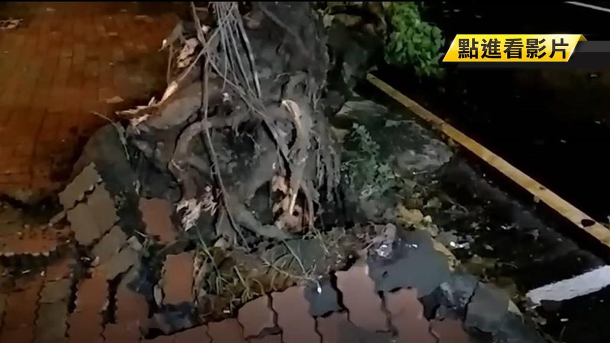 颱風路樹壓人車國賠難 天災不可抗力免賠