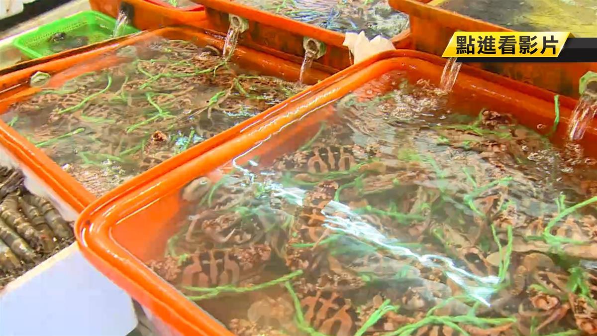 萬里秋蟹季開跑 首批螃蟹上岸民眾嚐鮮