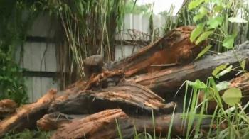 河床、溪邊漂流木別亂拿!林管處:屬國家財產