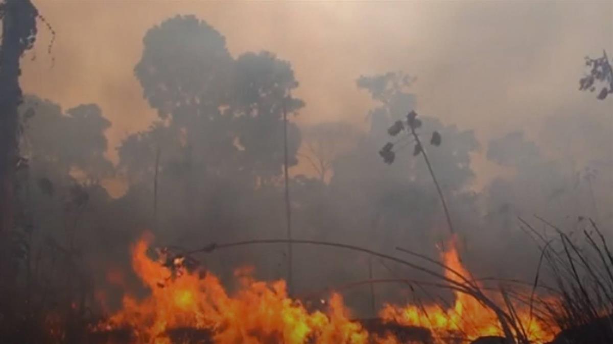 地球之肺亞馬遜雨林 野火燒成焦黑墳場