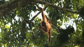雅加達沉沒中!印尼遷都恐破壞生態