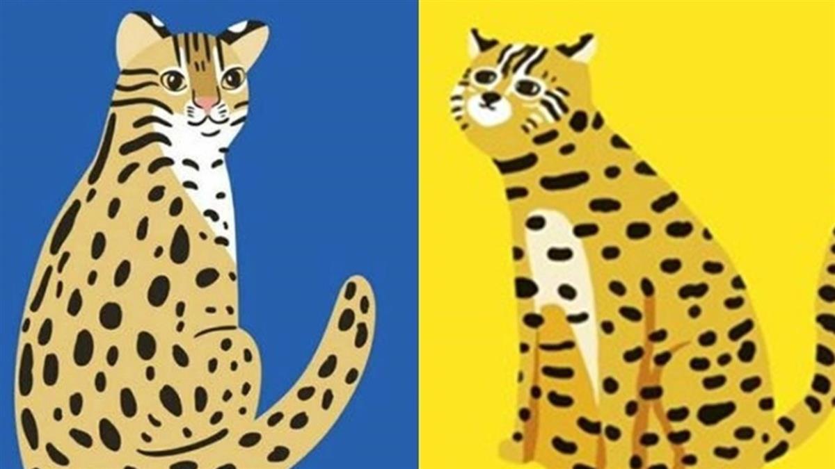 觀光局:台俄設計師石虎圖 將同現集集彩繪列車