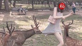 狂飄XX味!長腿妹遭奈良鹿啃裙 網歪樓:懂吃