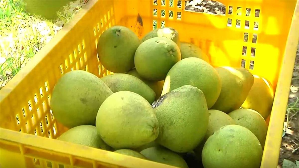 柚子配5類藥品易中毒!2種成分是關鍵