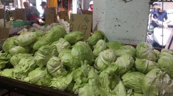 812豪雨後超種高麗菜 農委會示警:避價崩