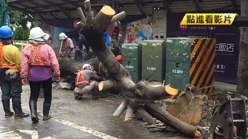 為配合商場規畫 高雄整排30年大樹被砍頭