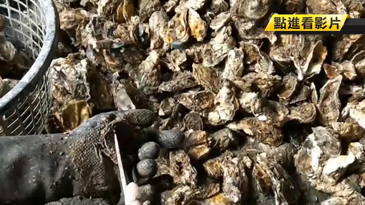 中秋市場蚵價漲 供應商要蚵農簽漲聲明引爭執