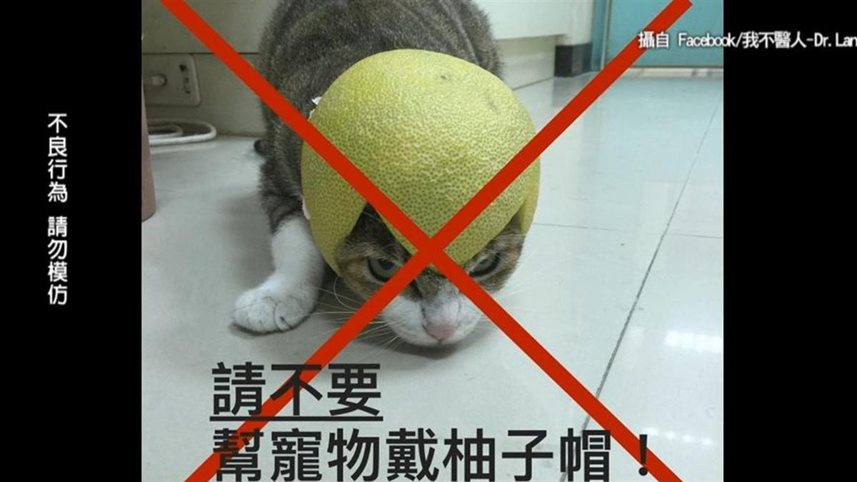 貓狗戴柚子帽千萬母湯!醫:恐傷害內臟