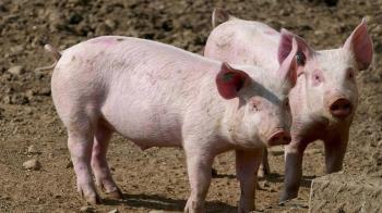 韓國也爆非洲豬瘟 今午起帶肉入境重罰20萬