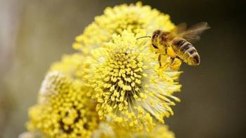 5億蜜蜂中毒而死!專家抖曝:恐食物戰爭