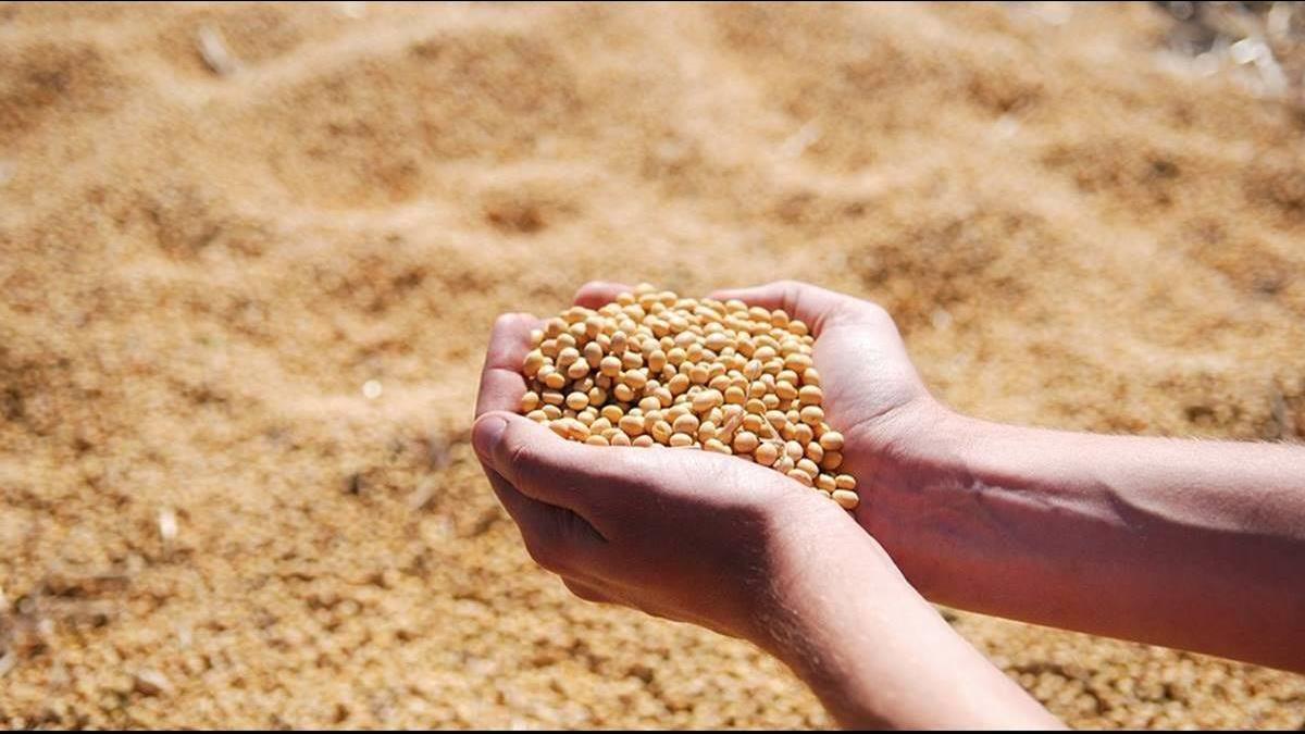 美讚「可靠又守信」!台再砸682億買玉米大豆
