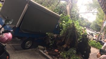 米塔強風釀災!北市路樹倒塌 貨車當場遭壓到