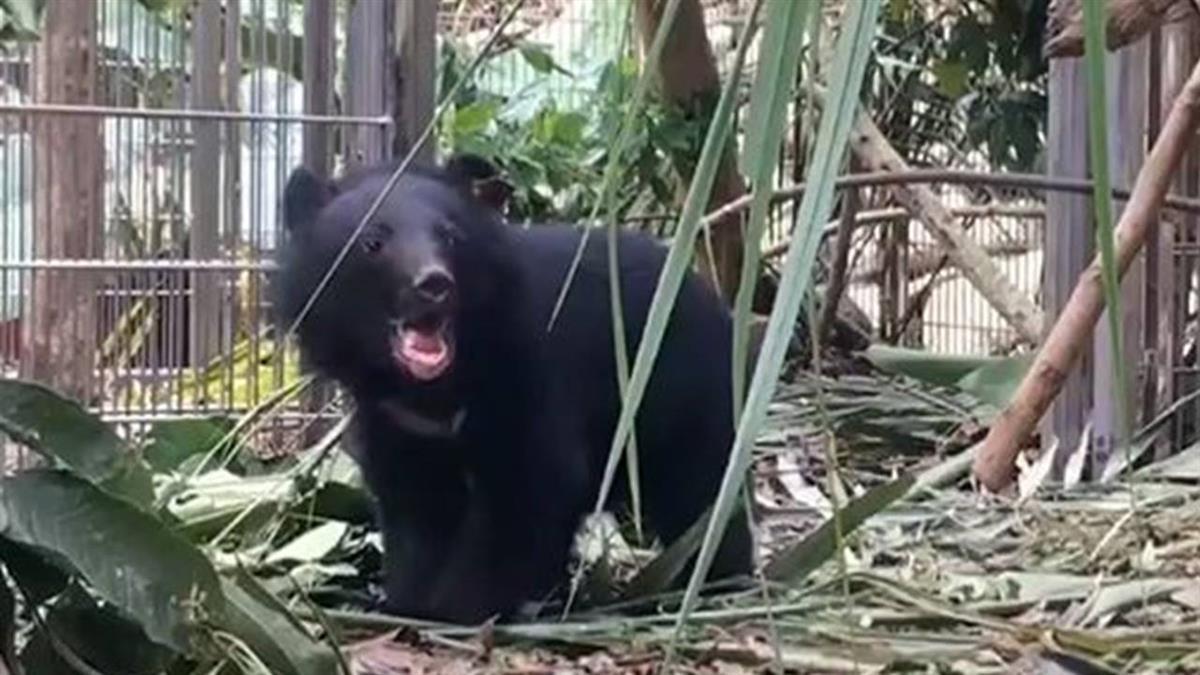 廣源小熊搬新家 拉單槓找飼料、泡澡沖涼超可愛
